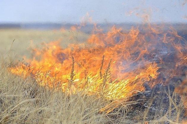 Пожарно-спасательные подразделения МЧС России 4 раза привлекались для ликвидации палов сухой травы на территории Калининградской области