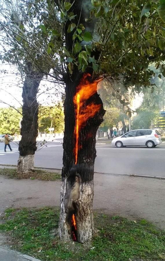 Пожарно-спасательное подразделение МЧС России ликвидировало пожар на территории Зеленоградского ГО